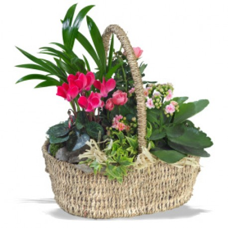 Pretty Planted basket